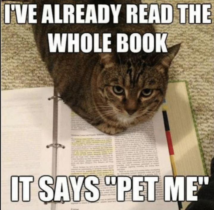 """""""I've already read the whole book. It says 'Pet me'."""""""