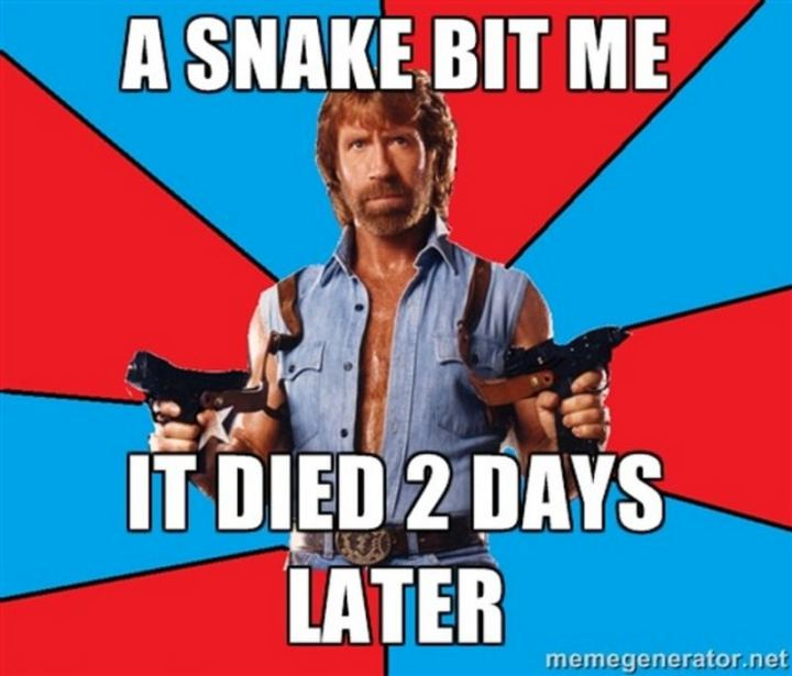 """""""A snake bit me. It died 2 days later."""""""