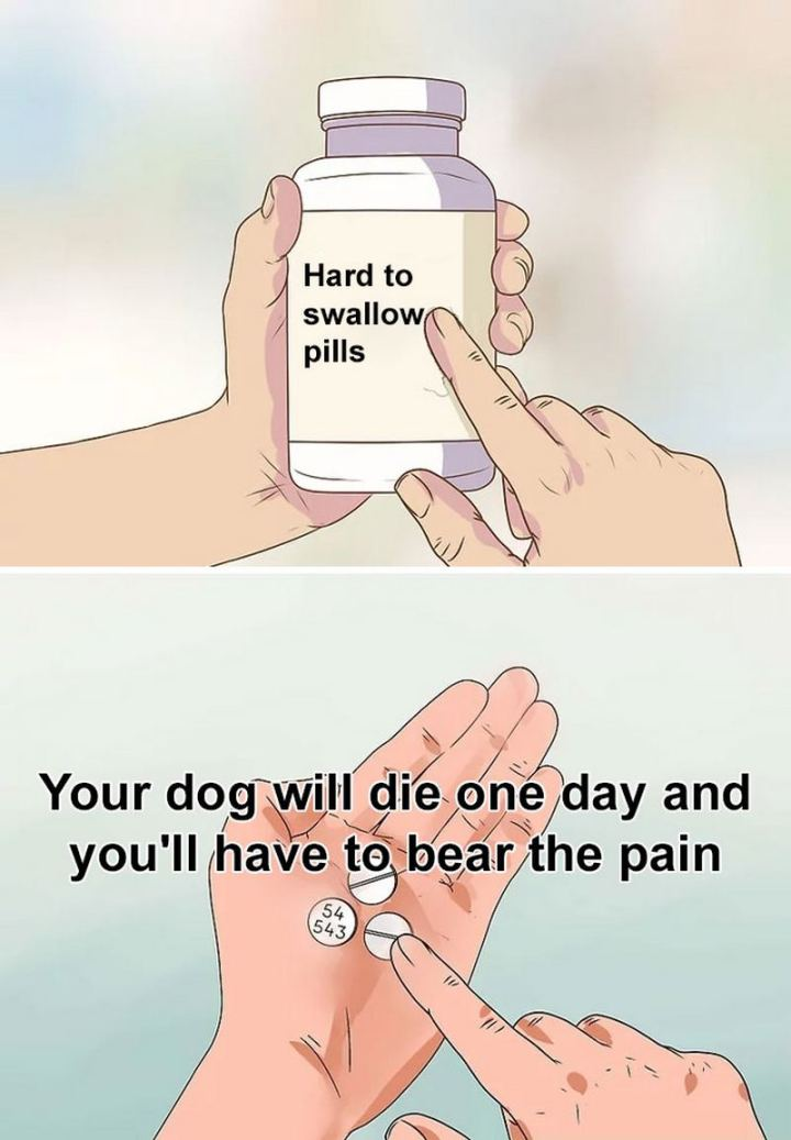 "61 ""Hard to Swallow Pills"" Memes - ""Your dog will die one day and you'll have to bear the pain."""