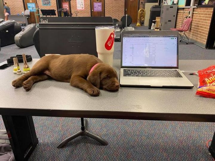 """Dogspotting: """"Coworker left his baked pawtato on my desk."""""""