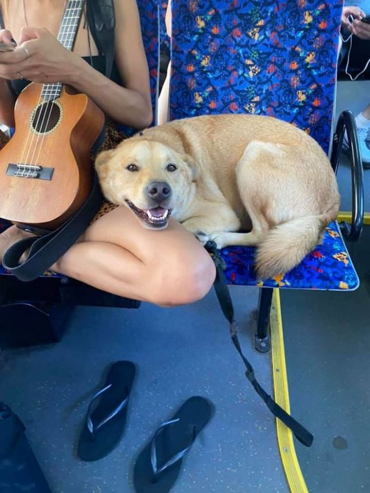 """""""Spotted this smiling cutie on the bus with his musical owner!"""""""