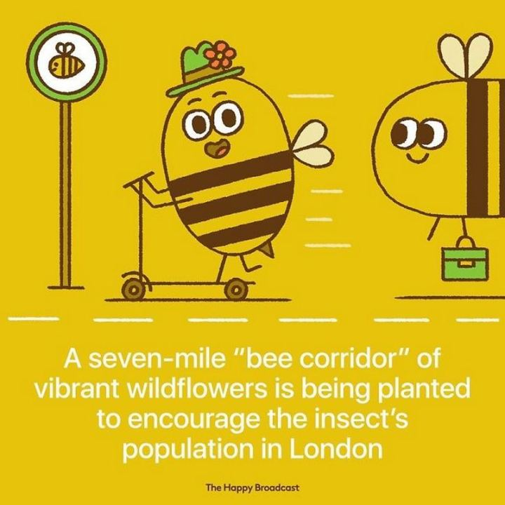 "The Happy Broadcast - ""A seven-mile 'bee corridor' of vibrant wildflowers is being planted to encourage the insect's population in London."""