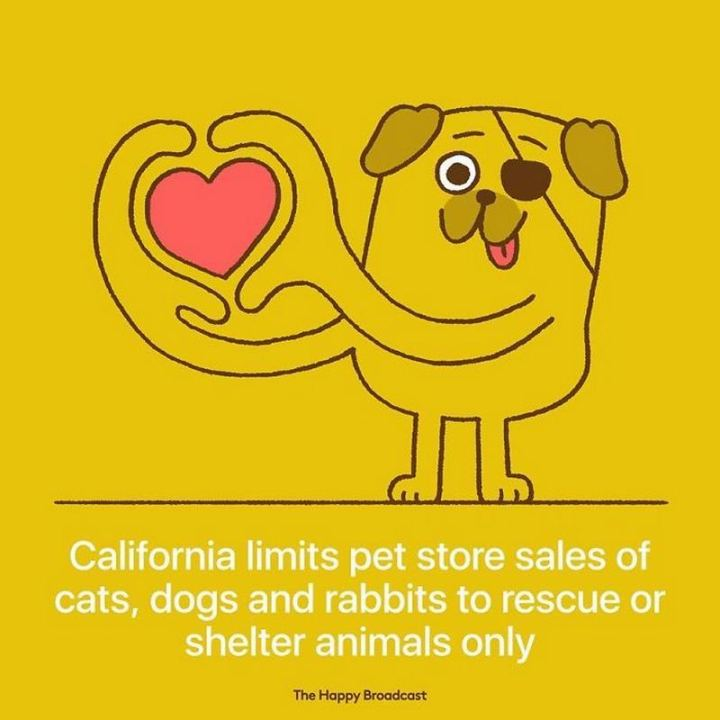 "The Happy Broadcast - ""California limits pet store sales of cats, dogs, and rabbits to rescue or shelter animals only."""