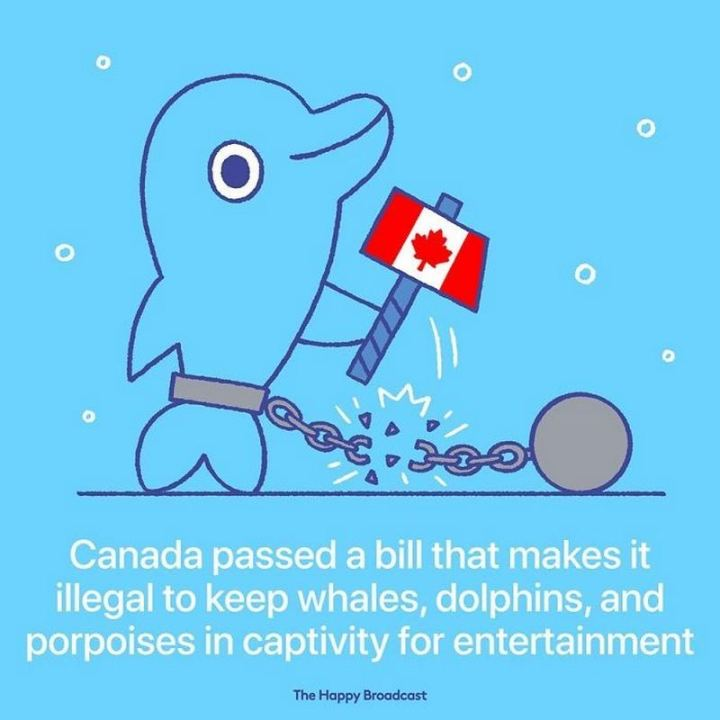 "The Happy Broadcast - ""Canada passed a bill that makes it illegal to keep whales, dolphins, and porpoises in captivity for entertainment."""