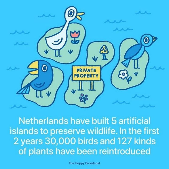 """Netherlands have built 5 artificial islands to preserve wildlife. In the first 2 years, 30,000 birds and 127 kinds of plants have been reintroduced."""