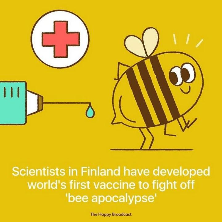 """Scientists in Finland have developed the world's first vaccine to fight off 'bee apocalypse'."""