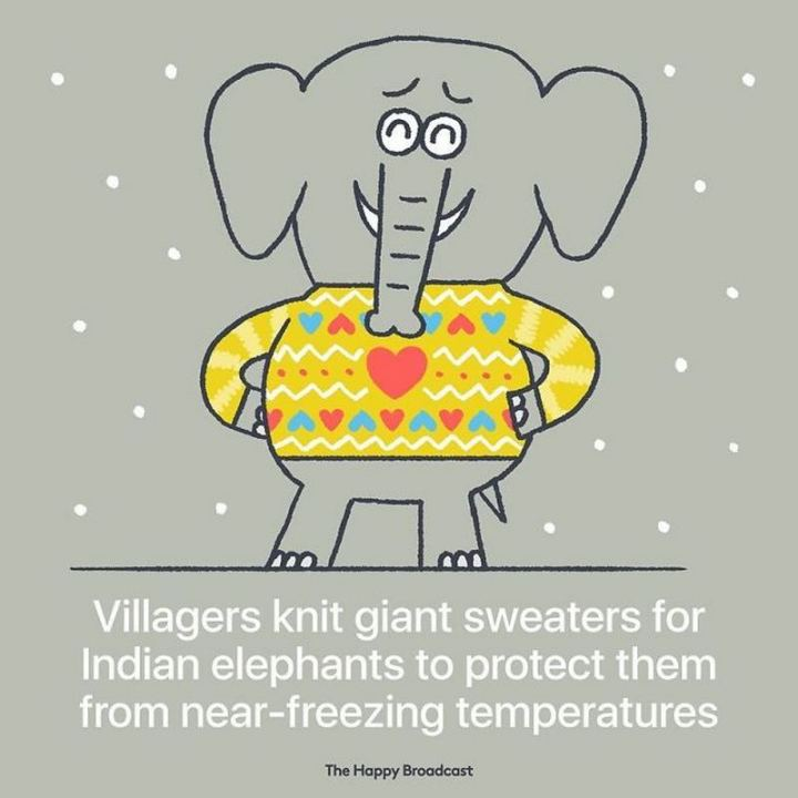 """Villagers knit giant sweaters for Indian elephants to protect them from near-freezing temperatures."