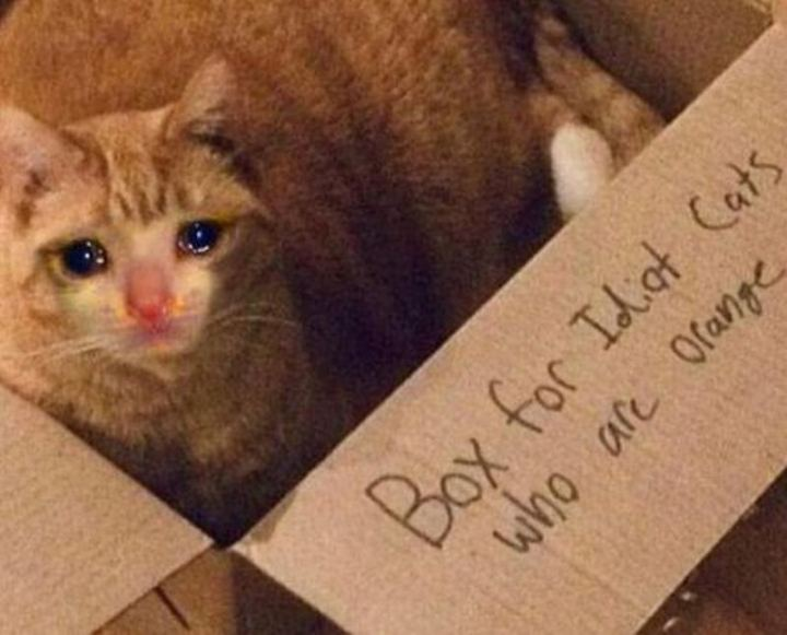 "29 Funny Crying Cat Memes - ""Box for idiot cats who are orange."""