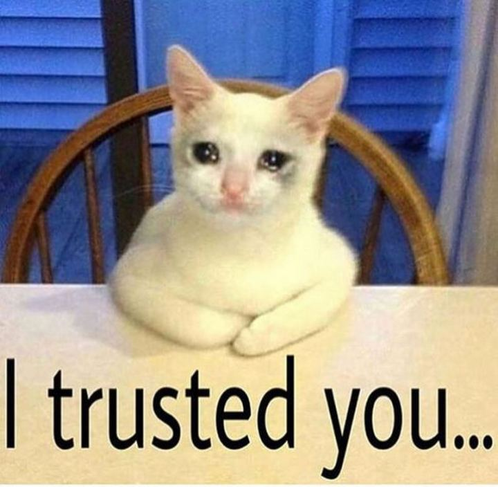 "29 Funny Crying Cat Memes - ""I trusted you."""
