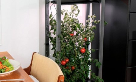 Grow your own salad indoors with the AeroGarden Farm 12XL down to $400 today