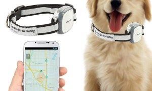 GPS Trackers for Dogs & Cats: 10 tips on how to choose the best device