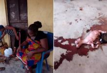 Photo of Pregnant Woman Gives Birth To a Goat In Nigerian