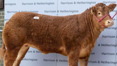 Cow Named After Posh Spice Breaks World Sale Record
