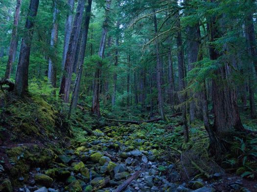 hoh-rain-forest-olympic-national-park_51546_990x742