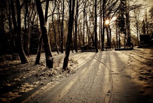 Wintercholia.Small