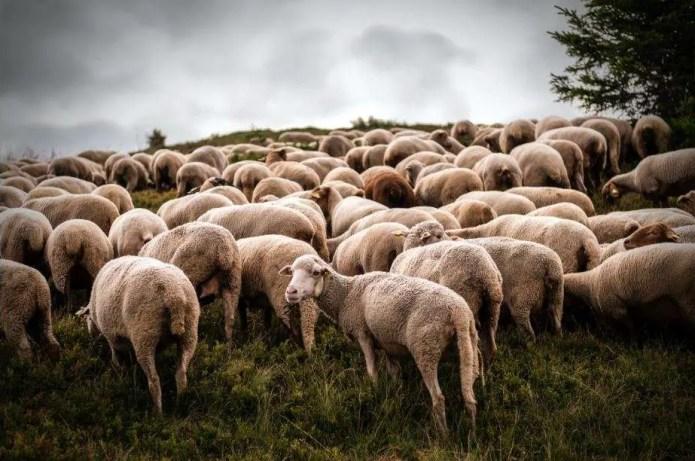 leadership short stories prince and sheep