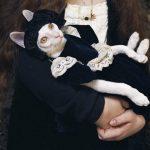 Kanttekeningen: over grote verhalen en kattenvrouwtjes