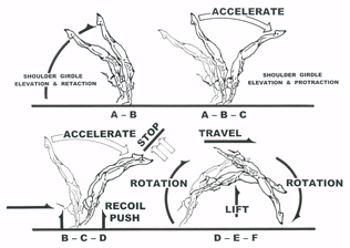 Gymnastics book, Championship Gymnastics: Biomechanical
