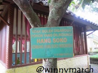 Hang Soko