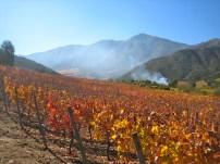 Vines at San Jose