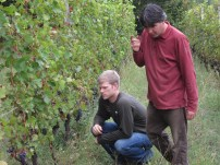 Inspecting the Grapes