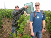 Matt doing some heavy lifting among Le Bon Pasteur's vines in Pomerol.