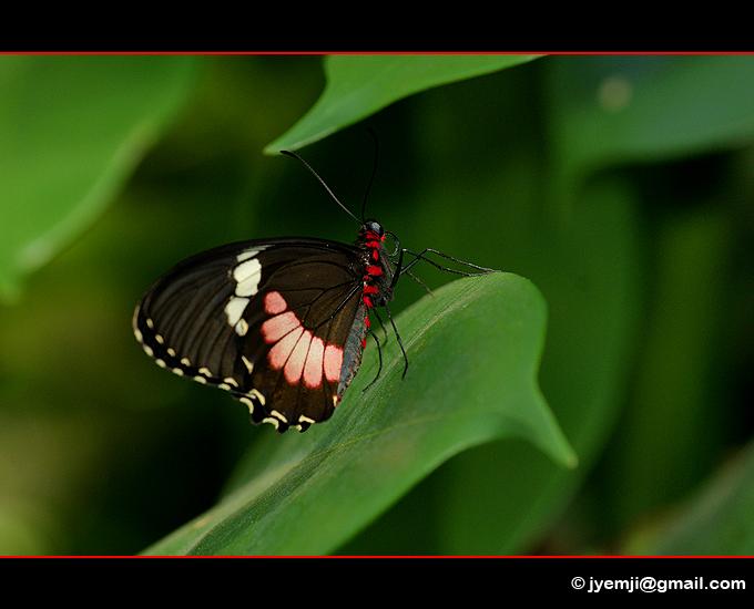 Photographies d'Alsace (Serre aux Papillons d'Hunawihr) par © Hatuey Photographies