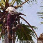 "Myanmar Birmanie, Photographies Myanmar Birmanie Travel in Birmania Myanmar Sucre de palme blog by ""© Hatuey Photographies"