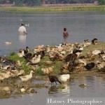 Asie, Myanmar,U BEIN Bridge,Amarapura, Photographies, by © Hatuey Photographies