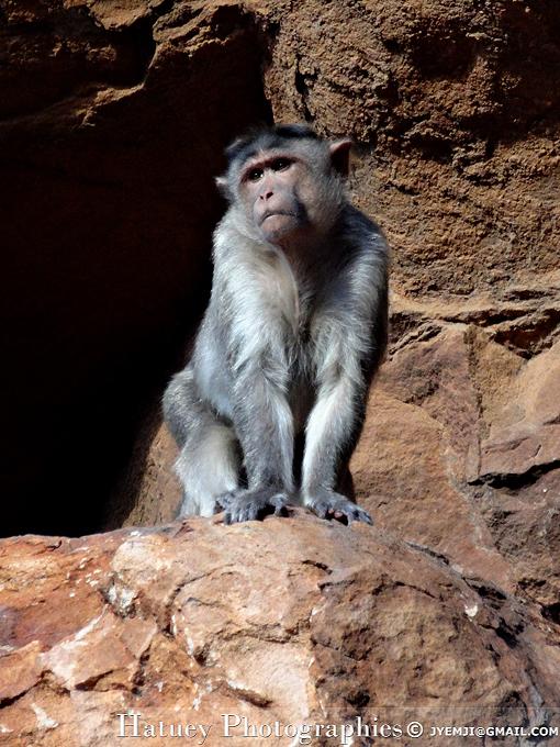 Singes de Badami Cave (India, Karnataka) , Tourism in South India. Photographs of South India, Photographies en Inde du Sud par © Hatuey Photographies