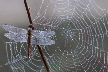 caught-in-web