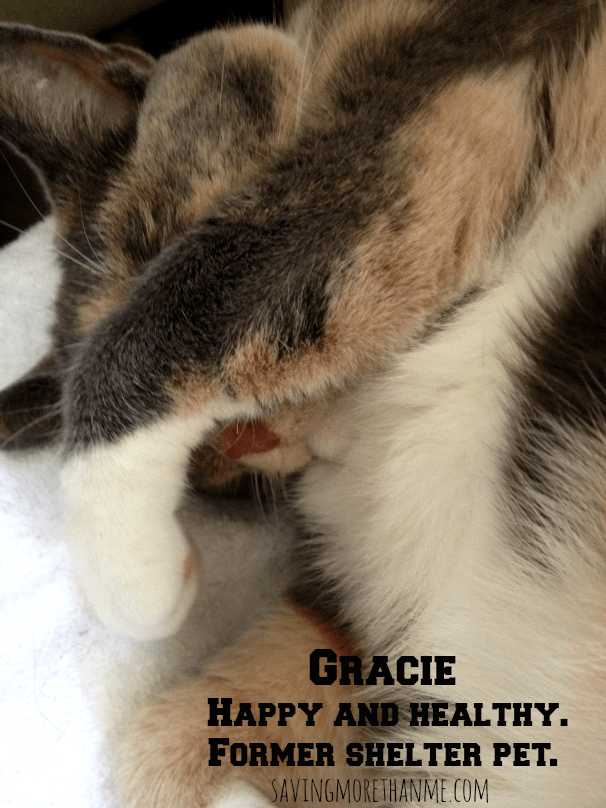 Gracie happy and healthy former shelter pet