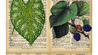 DIY Vintage Botanical Prints {Free Downloads}