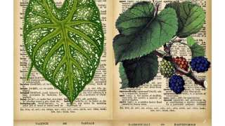 DIY Vintage Botanical Prints {Free Downloads}
