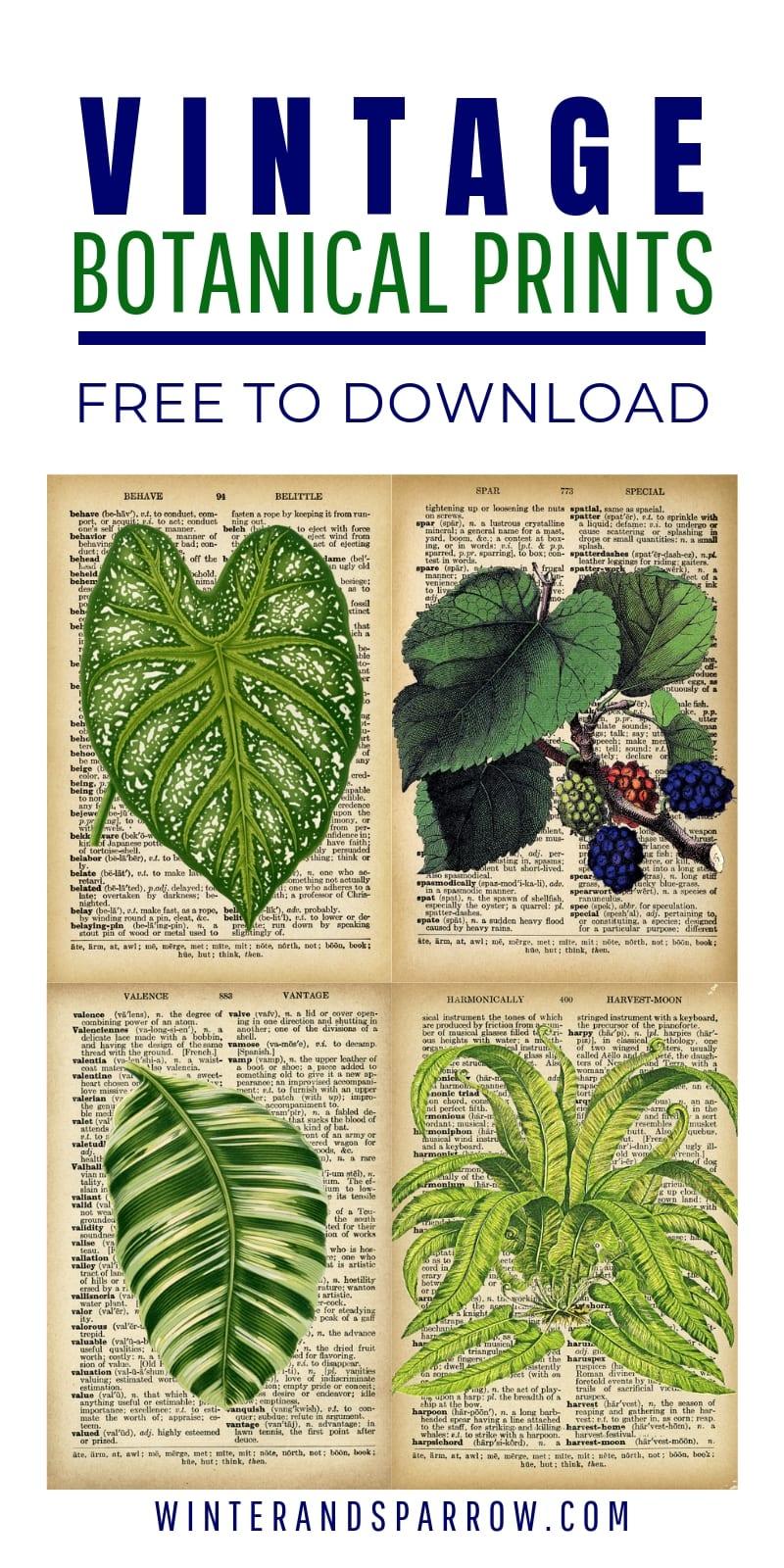 DIY Vintage Botanical Prints {Free Downloads} | winterandsparrow.com #vintagebotanicalprints #freebotanicalprints #vintageprints