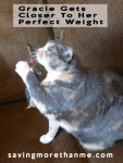 Gracie Gets Closer To Her Perfect Weight #Perfect Weight #cats