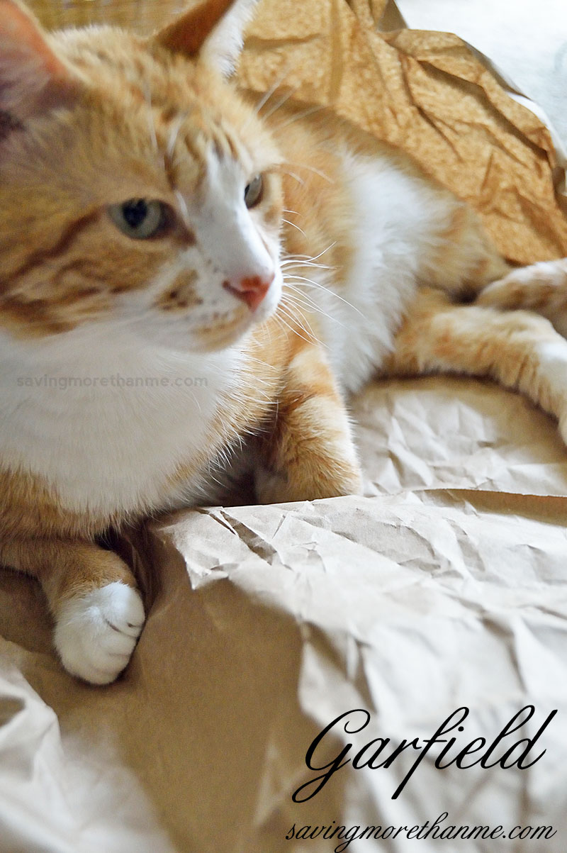 5 Helpful Props For Indoor Cat Photos [ad] winterandsparrow.com