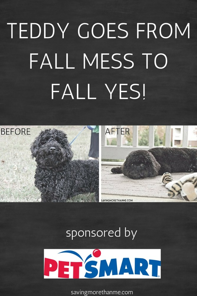The Dog Groomer Takes Teddy From Fall Mess To Fall Yes! {ad} @PetSmart #PetSmartGrooming