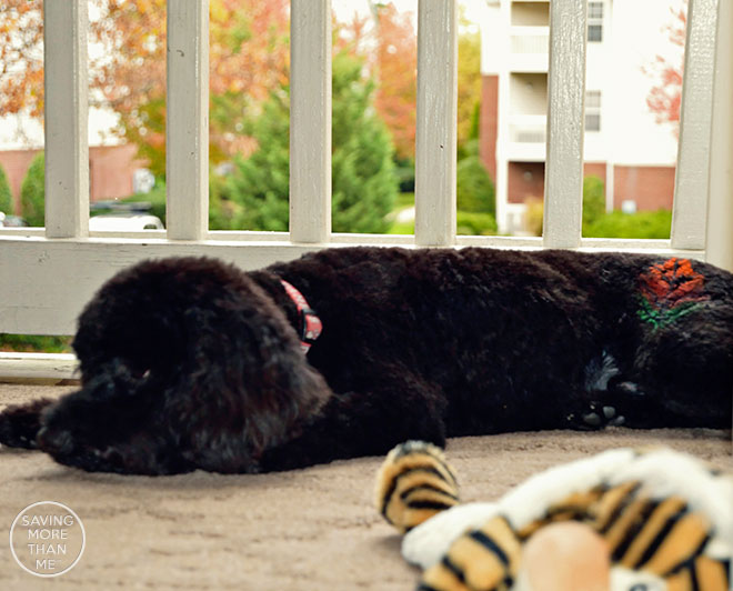 Deck The Halls Then Deck The Dog With PetSmart Grooming @PetSmart #PetSmartGrooming #ad
