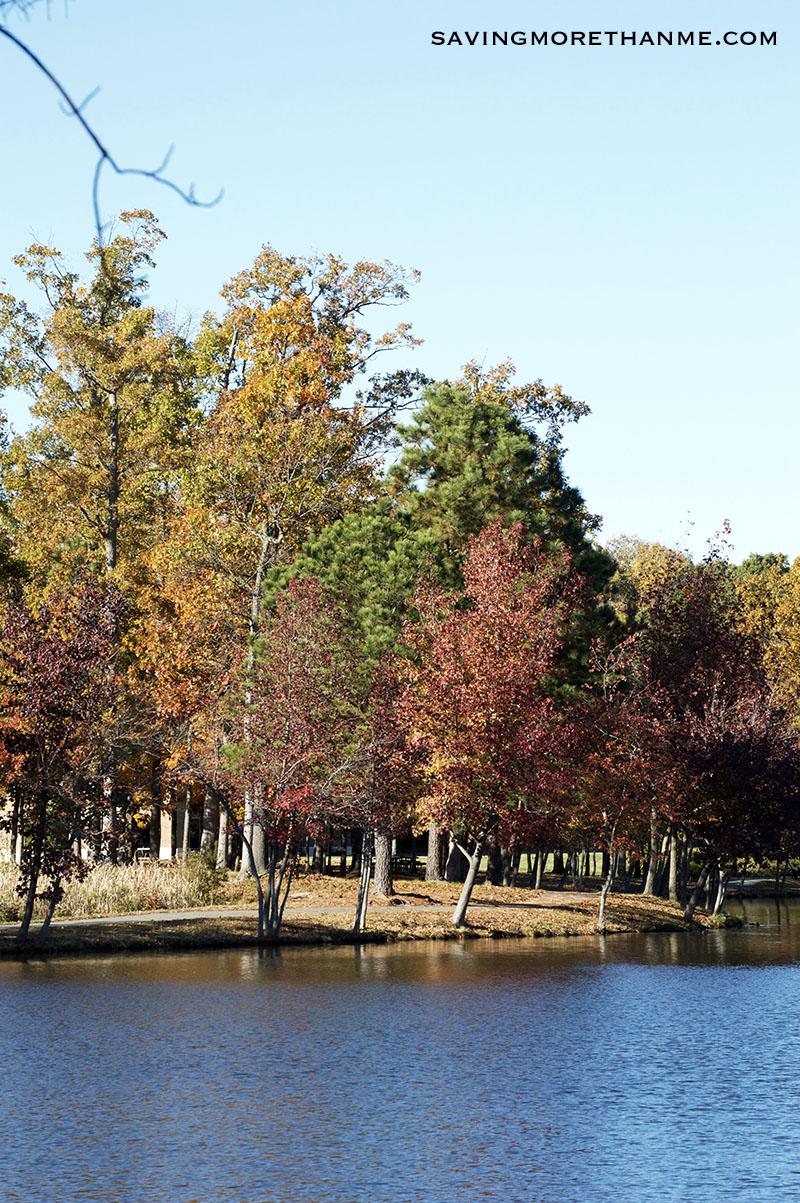 Fourth Annual Fall In Virginia Photos