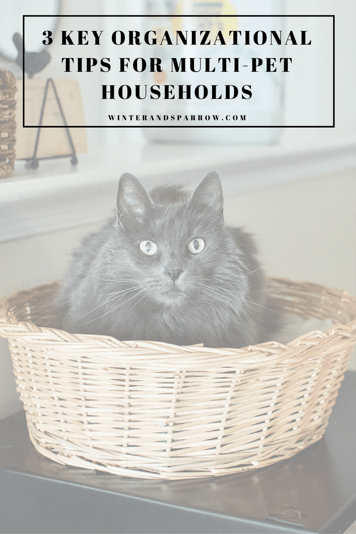 3 Key Organizational Tips For Multi-Pet Households  #ad #TidyTreatment winterandsparrow.com