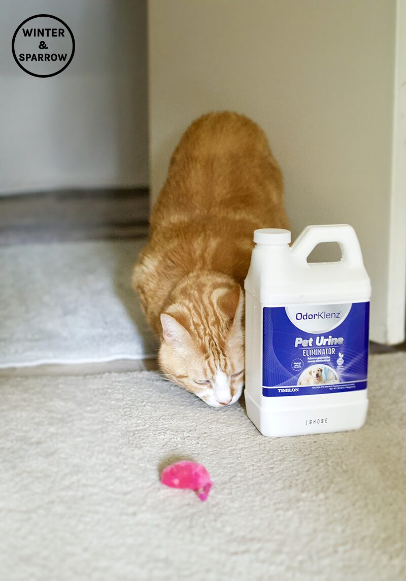 Where'd you put the cat? | Did Fluffy Mark His Territory Like Garfield? Find Out How I Magically Got Rid Of Cat Urine Spray Odor #ad