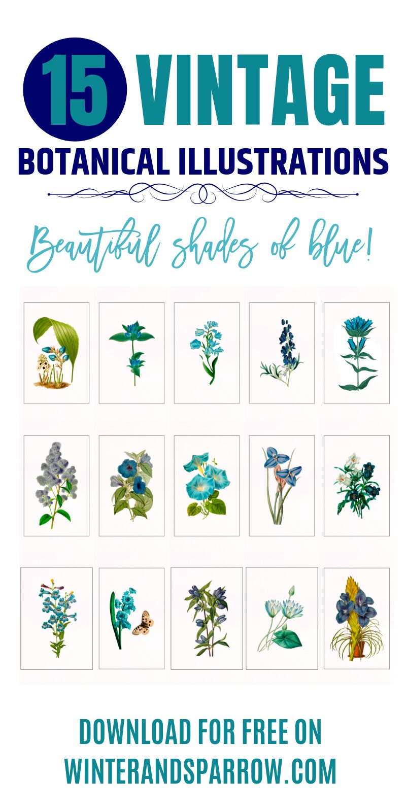 Blue Botanical Prints: 15 Vintage Illustrations That Will Add Beautiful Shades of Blue To Your Home | winterandsparrow.com #bluebotanicalillustrations #vintageillustrations #botanicalprints #vintagebotanicalprints #flowerprintables