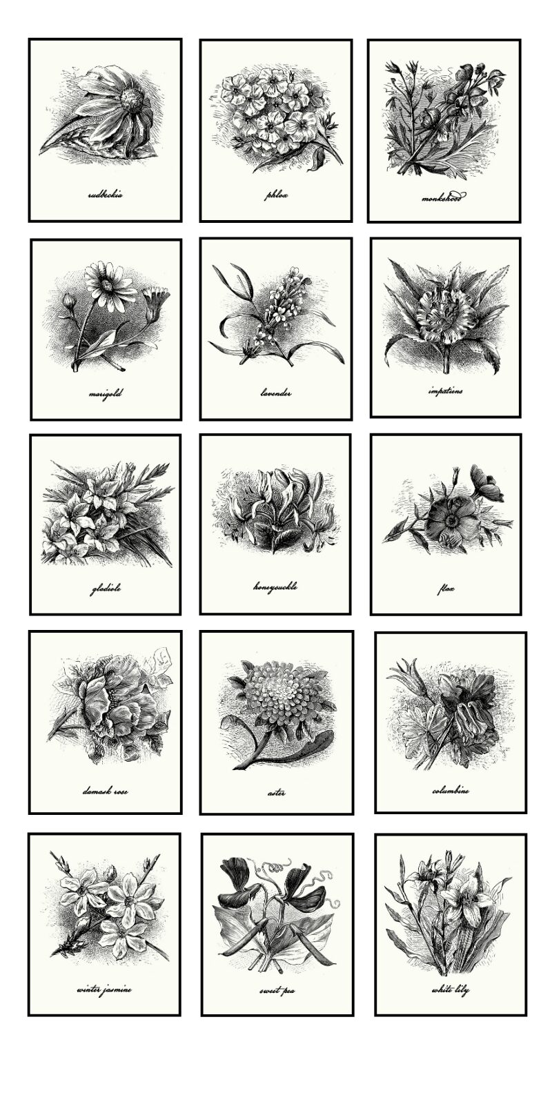 15 Vintage Black and White Farmhouse Style Botanical Prints