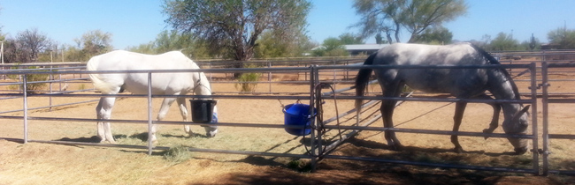 Scottsdale Horse Boarding Turnouts2