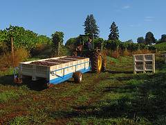 Trailer hauling grapes sunny