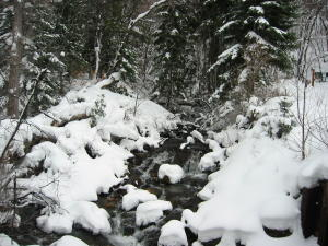 snowshoe-2.jpg