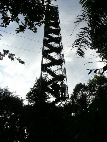 canopy-tower-from-below
