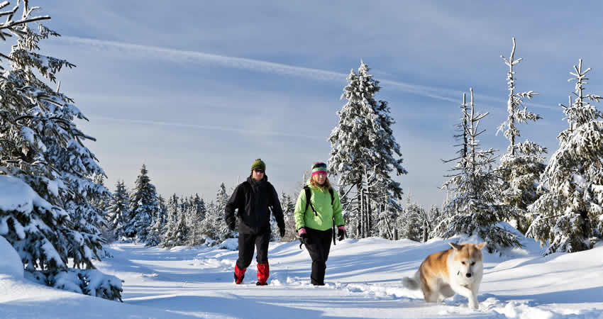 De hond mee wintersport