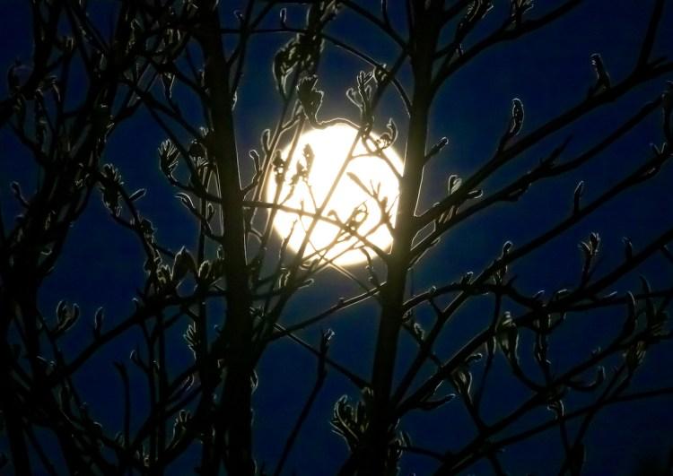 Moon Branch- Izumi Schmidt Uchida